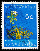 Post stamp from Republic of South Africa — Foto de Stock