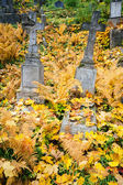 Old cemetery  — Foto Stock