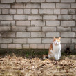 Cat by the wall — Stock Photo #50121515
