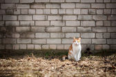 Cat by the wall — Stockfoto