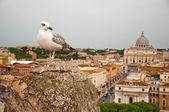 чайка и санкт-питерс базилики - ватикано - италия — Стоковое фото