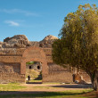 Roman ruins and tree at Villa Adriana — Stock Photo
