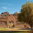 Roman ruins and tree at Villa Adriana - Stock Photo