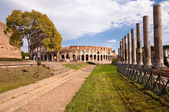 Colosseo and venus temple columns path and tree view from Roman — Stock Photo