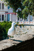 Seagull on a wall of Miramare Castle in Trieste — Stock Photo