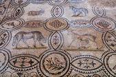 Vier dierlijke mozaïeken binnen basilica di aquileia — Stockfoto