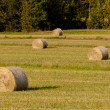 Hhay rolls on fields — Stock Photo