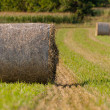 Hay roll on fields close up — Stock Photo