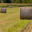 Tree hay rolls on field — Stock Photo