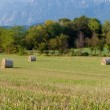 Panoramic view of hay rolls field — Stock Photo