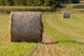 フィールド上に干し草ロールをクローズ アップ — ストック写真