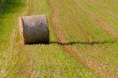 Hay rolls - Hay roll on field horizontal — Stock Photo