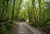 Path in autumn — Stock Photo