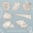 Seashells collection. — Stock Vector