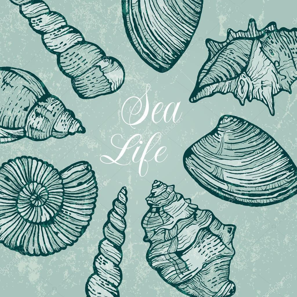 矢量背景与海贝壳