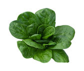Spinach Isolated — Stock Photo