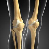 Human knees artwork — Stock Photo