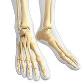 Human feet — Stock Photo