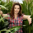 Beautiful woman in a cornfield — Foto de Stock