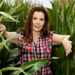 Stock Photo: Beautiful woman in a cornfield