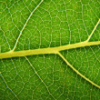 Macro leaft - Stock Photo