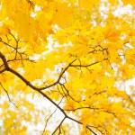 Autumn foliage at sunny day — Stock Photo