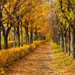 Pathway through the autumn park - Stock Photo