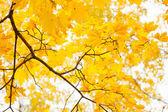 Fogliame di autunno alla giornata di sole — Foto Stock