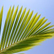 Stock Photo: Palm leaf viewed against bright sunlight on sky background
