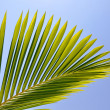 Palm leaf viewed against bright sunlight on sky background — Stock Photo