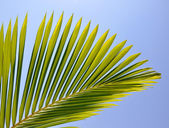 Palm leaf viewed against bright sunlight on sky background — Stok fotoğraf