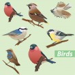 Stock Vector: Set of birds - tit, bullfinch, sparrow, crossbill