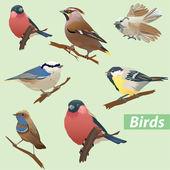 Multitude d'oiseaux - mésange, bouvreuil, bruant, bec-croisé des sapins — Vecteur