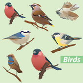 Set of birds - tit, bullfinch, sparrow, crossbill — Vector de stock