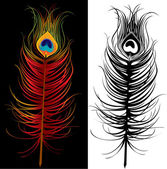 Peacock feather - colorful and black and white — Stock Vector