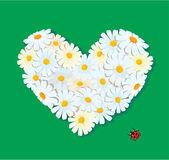 Corazón está hecho de margaritas sobre un fondo verde. día de San Valentín c — Vector de stock