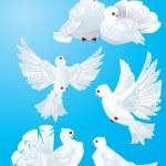 White pigeons — Stock Vector