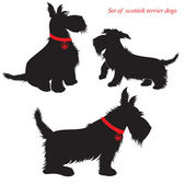 Set of of scottish terrier dogs silhouettes — Vettoriale Stock