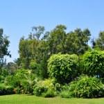 Hotel`s tropical garden, Cyprus — Stock Photo #18644927