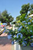 Way to beach in tropical resort — Stock Photo