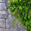 Old Stone wall and Green creeper plant - vertical picture. — 图库照片