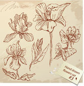 Set of Vintage Realistic graphic flowers - hand drawn images. — Stock Vector