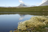 Summer landscape in Iceland. — Stock Photo