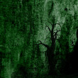Dark green tree — Stock Photo