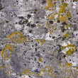 Seamless rock texture background closeup — Stock Photo #24741727