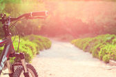 Bike on the road at sunset — Stock Photo