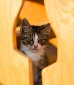 Kitten looking through wooden window — Stock Photo