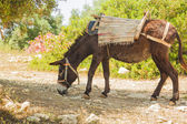 Donkey covered by the trappings — Stockfoto