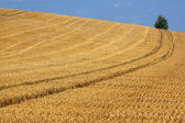 Arable Landscape — Stock Photo