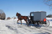 Amish Horse and Carriage — Foto Stock